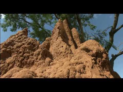 La Citadelle Assiégée - Fourmis vs Termites - Documentaire