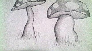 mushroom pencil drawing drawings draw paintingvalley