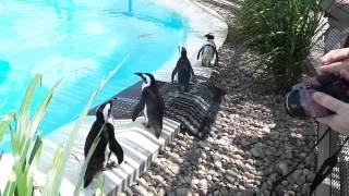 Day One in Wichita: Tanganyika Wildlife Park