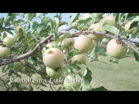 Buffalo Trail Orchard - Radio Bristol Farm Report