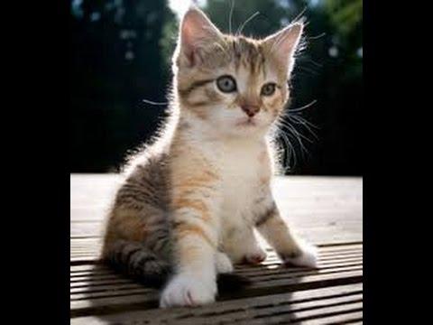 सपने में बिल्ली देखने का अर्थ