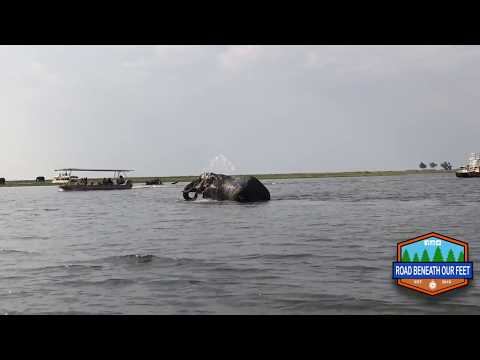 Elephant crossing Chobe river