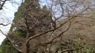 福浦から産交バスで沖へ・03223・芦北・湯浦・津奈木・佐敷