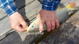 ИДЕАЛЬНАЯ рыбалка карпы и караси СУМАСШЕДШИЙ клев