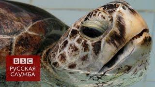 Из желудка черепахи достали 5 кг монет