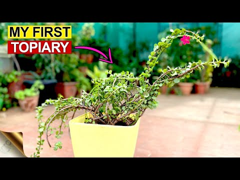 EASY DIY JADE PLANT TOPIARY IDEA FOR YOUR GARDEN | MY FIRST TOPIARY