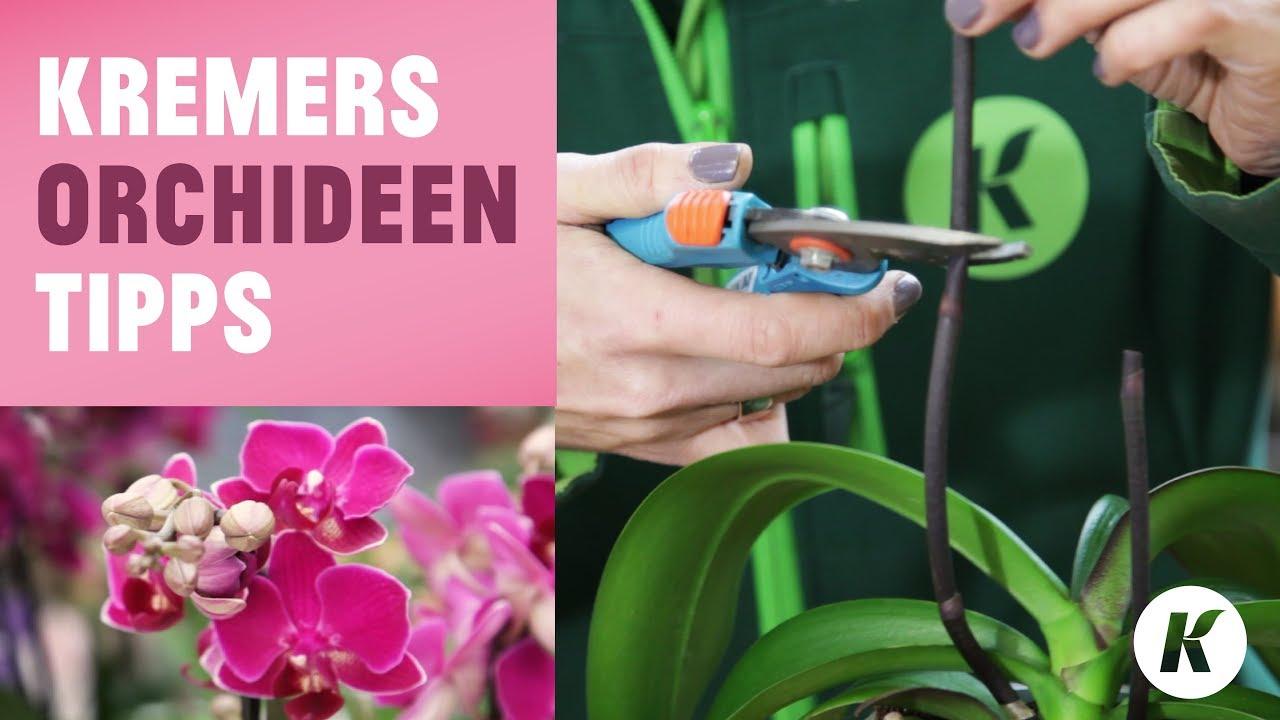 Orchideen Tipps Richtig Schneiden Umtopfen Tauchen Die