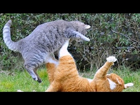 смотреть смешное видео кошек онлайн
