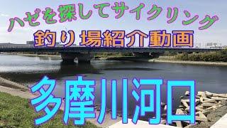 釣り場紹介 その8(多摩川河口:六郷橋新護岸(仮)等