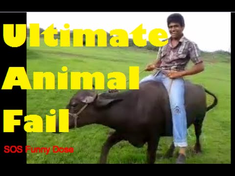 Ultimate Funny Animal Fail Compilation Funniest by SOS Funny DOSE
