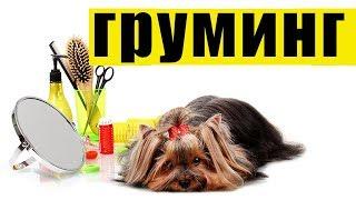 видео Что такое груминг для собаки?