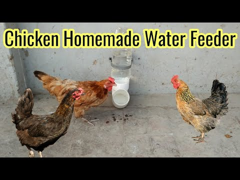 simple-homemade-chicken-water-feeder-makes-from-plastic-bottle-&-p-trap-–-easy-to-make-bird-feeder