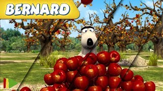 Bernard Bear | Zusammenstellung von Folgen | Der Apfelbaum