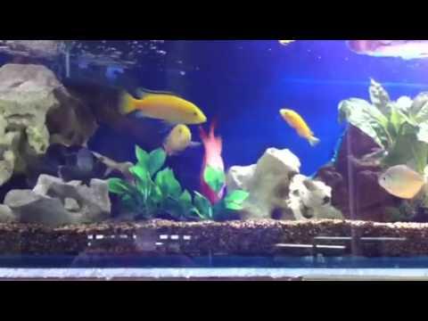 Information On Swim Bladder Problems In Fish