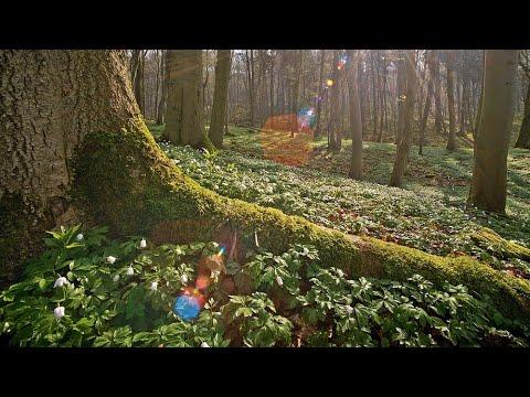 Das Geheime Leben Der Baume Trailer Filmclip Hd Youtube