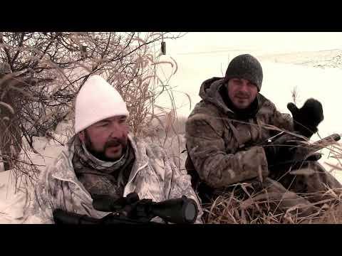 Coyote Hunting – Iowa Blizzard Coyote Hunt – DOUBLE!!