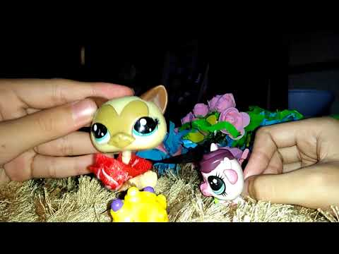 Tiny Creature! I An lps film I part 3 ( 2nd Film )
