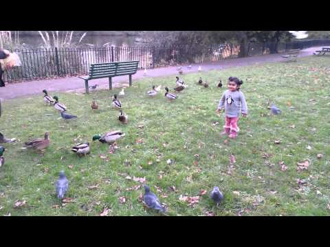 2yr Old Feeding Ducks, Doves & Seagulls