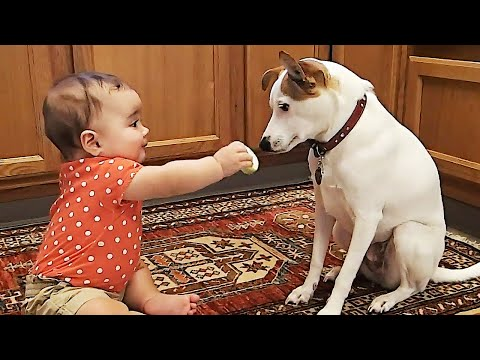 Baby With Dogs and Cats Playing Together ? Funny Baby and Pets Moments