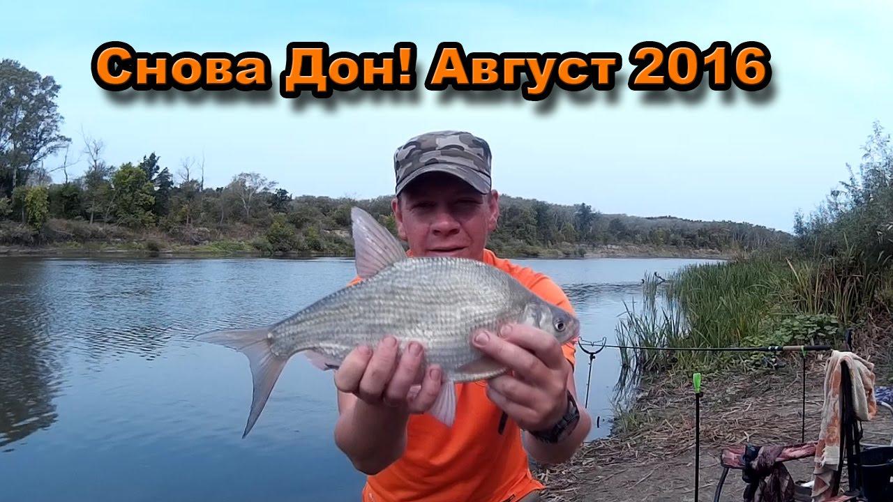 рыбалка на дону сейчас