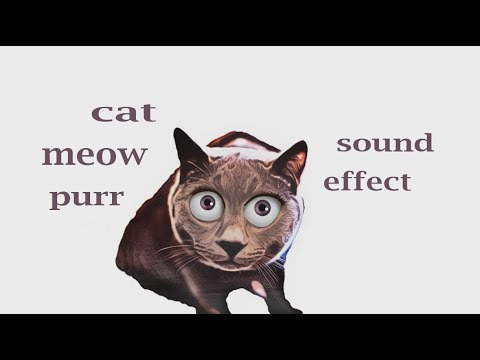 Cat meow sound youtube - Cat water fountain build how to