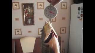 Самый большой карась.AVI(Симферополь, 30.04.2012 года был пойман на озере похожем на огромную