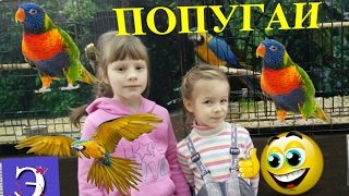 VLOG Выставка попугаев Минск Беларусь
