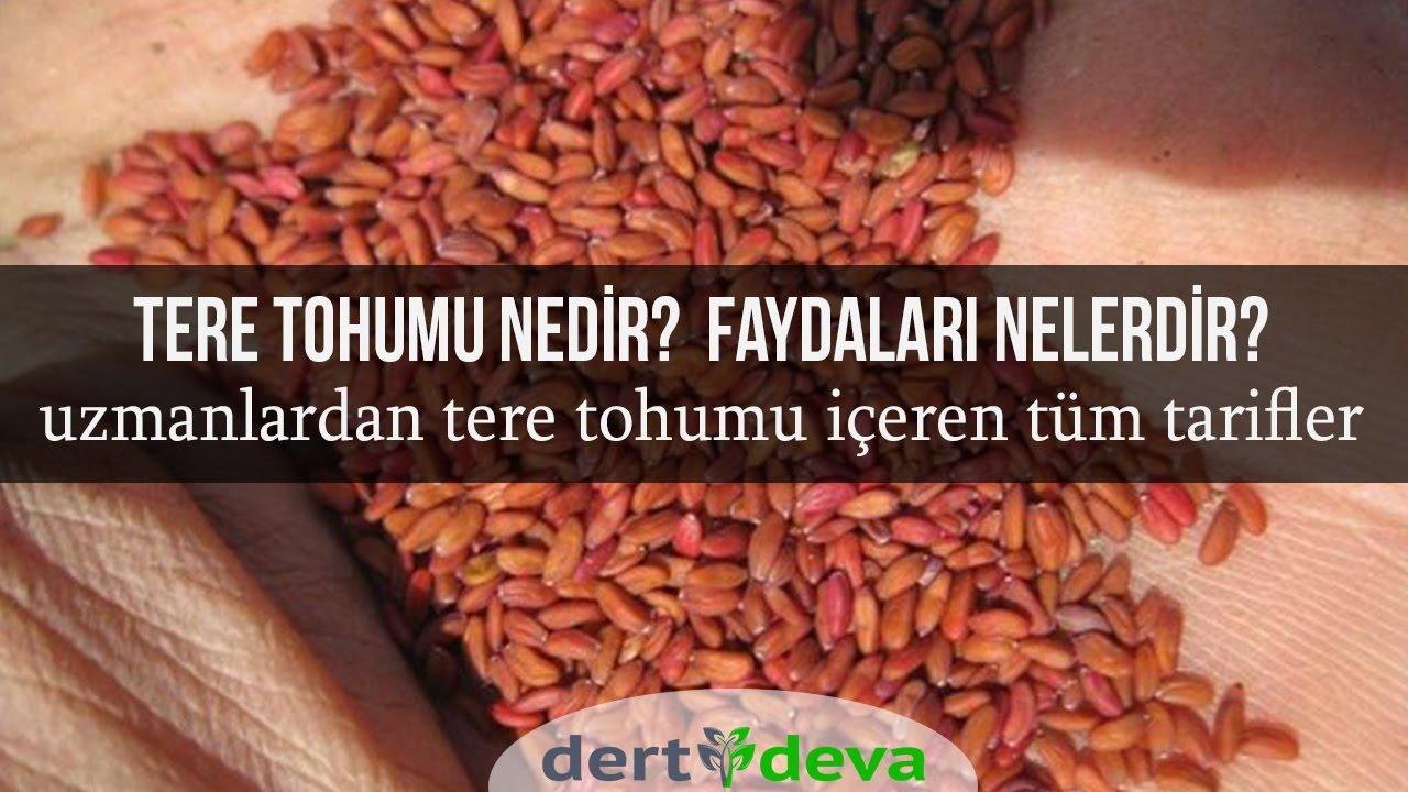 Tere tohumu ile zayıflama