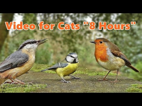 Videos for Cats to Watch - Bird Sounds and Bird Song * 8 HOU