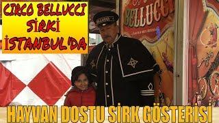 CIRCO BELLUCCI SİRKİ İSTANBUL !! Circo Bellucci - Hayvan Dostu Gösteri