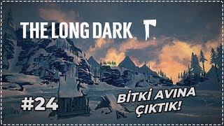 ŞİFALI BİTKİ AVINA ÇIKTIK! | The Long Dark - BÖLÜM 24