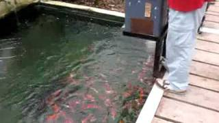 bepu fish farm