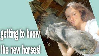 Vlog - Rescue Horse Updates!