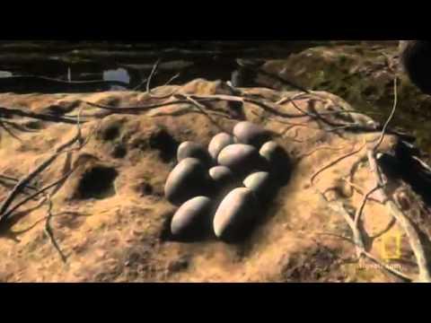 La formación de la Tierra Documental.