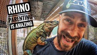 rhino-iguanas-ain-t-easy