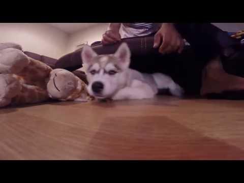 Nala -Siberian Husky - Teste video 4K - Gopro Hero 3+ Black Edition