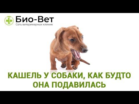 Болит у собаки горло