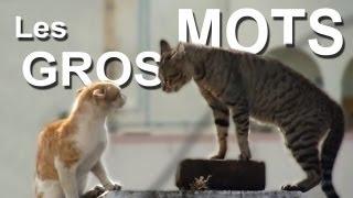 LES GROS MOTS - PAROLE DE CHAT thumbnail