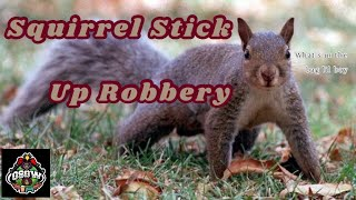 Project One For All: Squirrel Stick Up Robbery