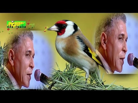 Stati Abdelaziz - dima chaaiba - ستاتي عبد العزيز