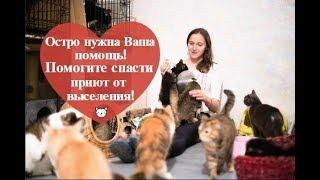 Бездомным животным нужна помощь: сбор средств на домик для приюта Матроскин