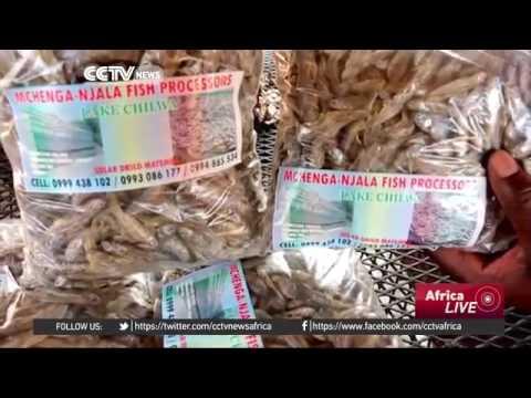 23814 Bibliothek cuisine CCTV Afrique Malawi fishermen use solar powered drying tents
