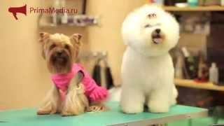Собак постригли во Владивостоке