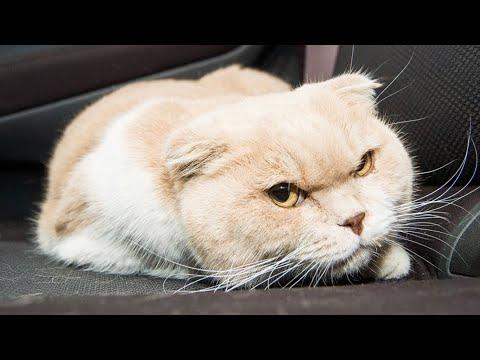 Вопрос: Как вылечить кошке обожженные лапы?