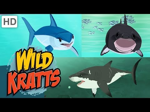 wild-kratts-🦈🌊-sharks:-predator-and-prey-|-shark-week-|-kids-videos