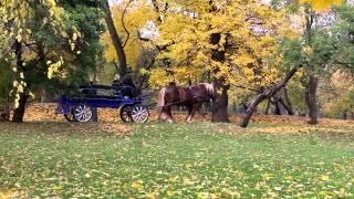 Художественная свадьба. Регистрация в Коломенском. Видеосъёмка в Москве  8 915 32 99 6 88 владимир