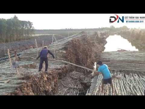 ✅ Lên Ghe Cừ Tràm Tại Kiên Giang | Quy Trình Vận Chuyển Cừ Tràm Bằng Đường Thủy - YouTube