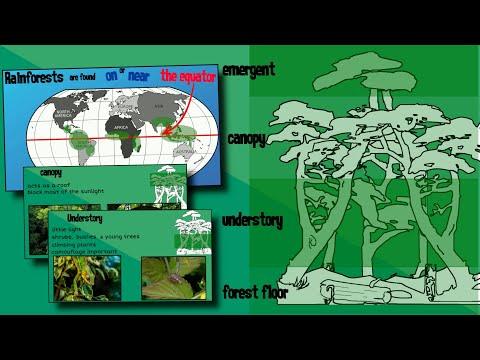 Layers of a Rainforest   EasyTeaching