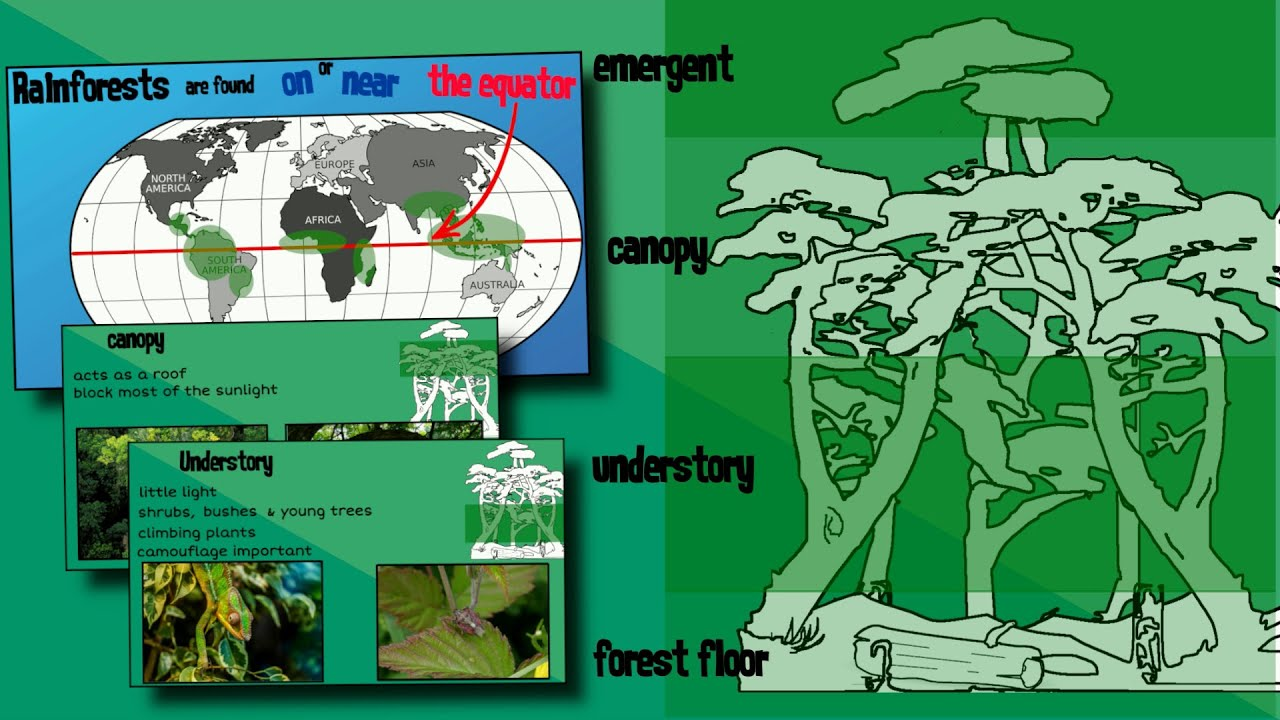 Layers Of A Rainforest Easyteaching Youtube