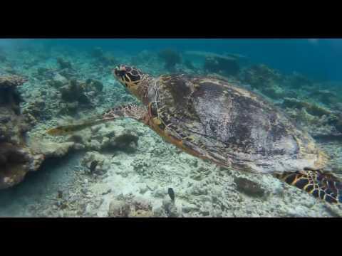 MALDIVE ALTERNATIVE: il paradiso esiste! - Isola di Dharavandhoo